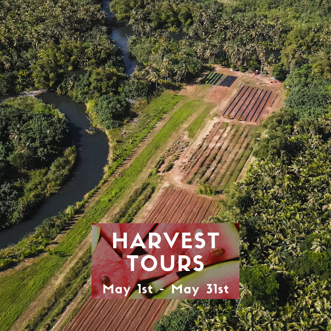 Things to do on Guam, Harvest Tour, Guam Tour